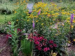 Pollinator Plants: The Best Perennials for a Pollinator Garden | Garden  Design
